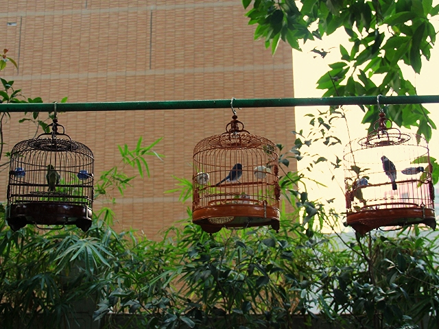 Bird Street Hong Kong cages