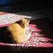 Small photo of Ginger enjoying adolescence