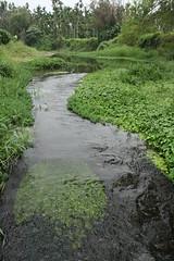溝水濕地河岸旁的自然植被讓每種生物都能找到最舒適的家,竹林、次生林、河岸帶和河流中的魚蝦、貝類,形成完整的生態系。