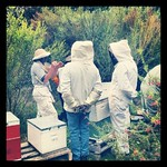 CERES Beekeeping Group 16/09/2012