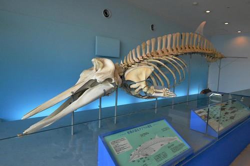 2012夏日大作戰 - 鹿児島 - かごしま水族館 (18)