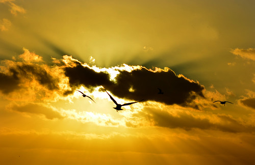 Gulls in Sunset - A Silhouette Composition