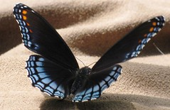 Butterfly Beautiful