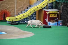 Pets Rule Show - SeaWorld 14