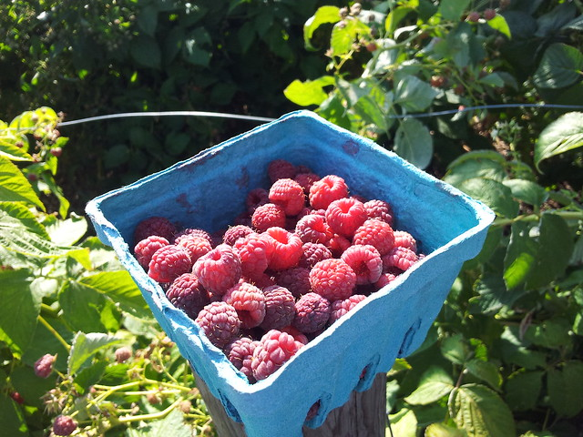 Community Garden raspberries
