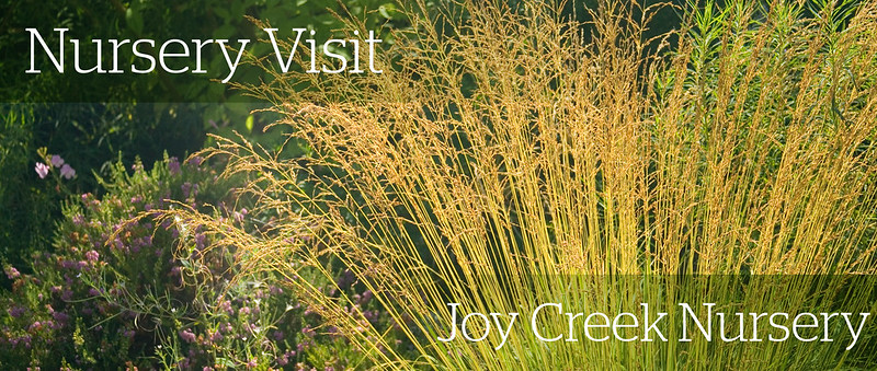 Joy Creek Header