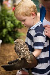 Gloria, The Little Owl & George