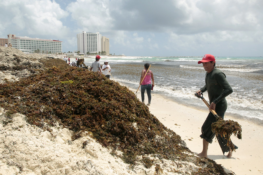 Cancun beach cleaned up after tropical storm Ernesto leaves