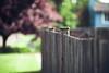 Happy Fence Friday [hff] by Mahoney Photography WA