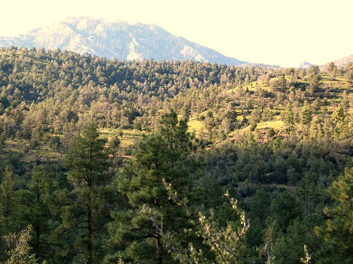 Prescott National Forest area