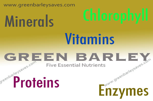 www.greenbarleysaves.com essential nutrients of green barley