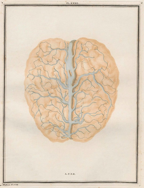 scientific sketch from 18th century showing view of brain and blood supply