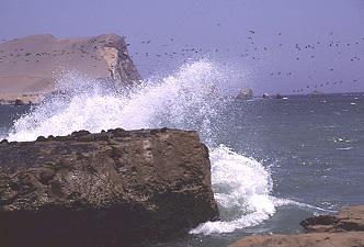 Sea kayaking in Paracas with Nature Expeditions (10)