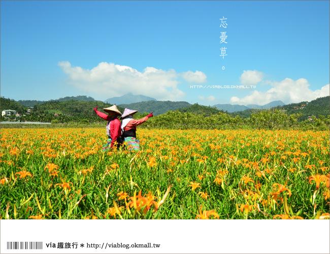 【日月潭金針花2012】南投金針花季~頭社金針花!黃澄澄的盛開中!25