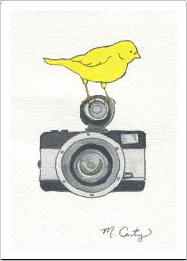 bird on a camera