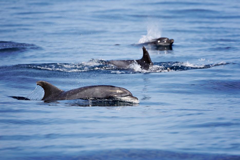 081812_05_dolphin2_02