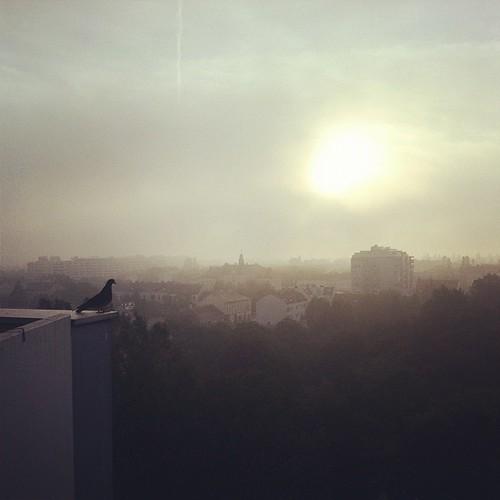 window view bird