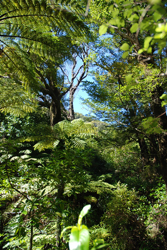Beautiful NZ forest by imajane