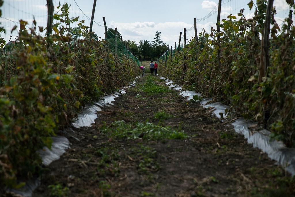 Karcsa önkormányzati gazdálkodás közmunkával, emuk tartása