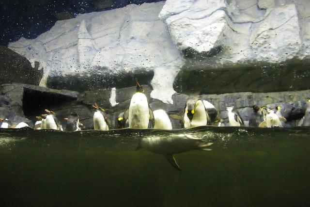 Visit to the Newport Aquarium (Newport, Kentucky) Flickr - Photo ...