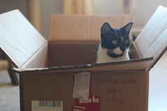 [フリー画像素材] 動物 1, 猫・ネコ ID:201208231800