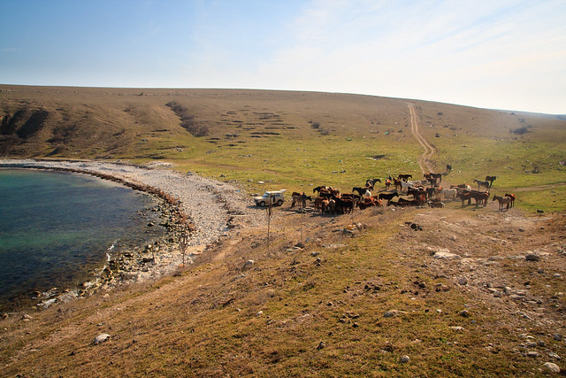 Herd of horses by the sea