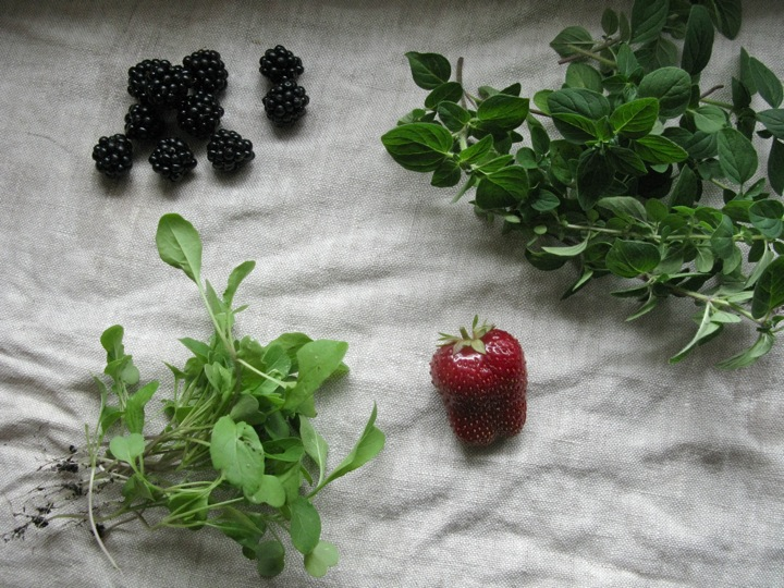 morning foraging 001