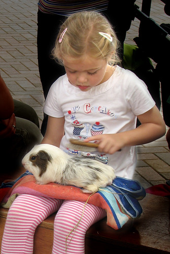 Erin brushing a guinea pig by Helen in Wales