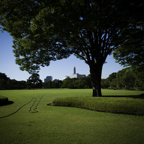 Tree, Garden Hose, Meadow, Imperial Palace, Tokyo