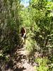 Sentier de Sainte-Lucie : la trace étroite mais passante !