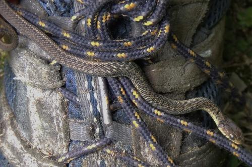 Shoelace Snake!