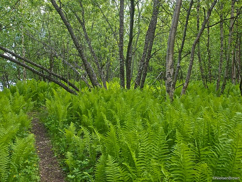 The ferny path