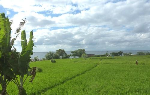 Bali-Amed (3)