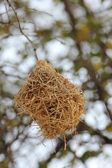 nest, branch, winter, tree, nature, macro photography, bird nest, flora, close-up, twig,