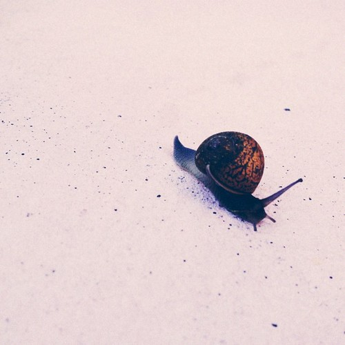 Zachary and I found this #snail in the #backyard this morning before school and had a mini #science lesson. #vscocam