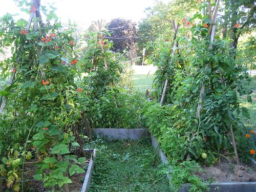 tomato teepees