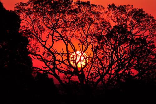 無料写真素材, 自然風景, 朝焼け・夕焼け, 樹木, 太陽