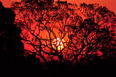 [フリー画像素材] 自然風景, 朝焼け・夕焼け, 樹木, 太陽 ID:201209110000