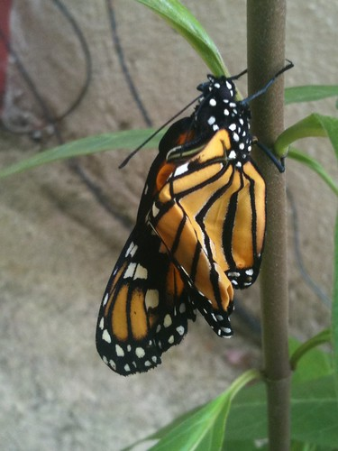 20120908 05 mariposa