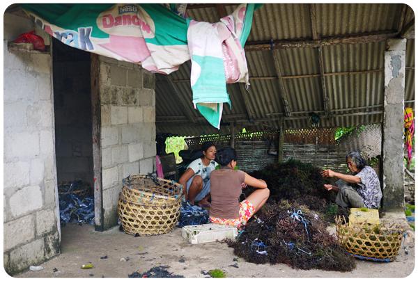 Nusa Penida - Trieuses d'algues