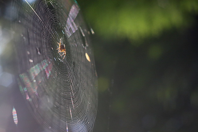 spiderweb, washington park