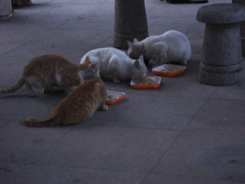 Cats in Shenyang, China _ 0168