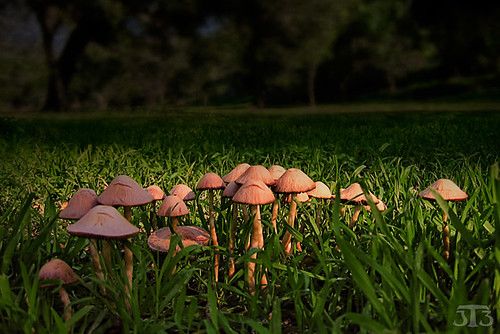 park grass mushrooms sandiego elmonte