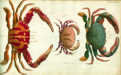 010-Â Versuch einer Naturgeschichte der Krabben und Krebse- 1790- Johann Friedrich Wilhelm Herbst- Humboldt University