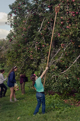 Apples-0121-2