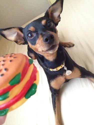 これじゃない?ハンバーガー