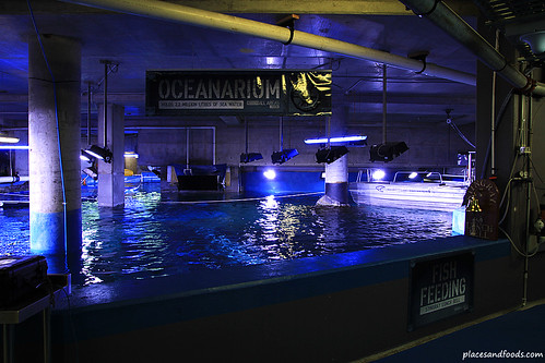 Walk With The Shark Melbourne Aquarium Ocenarium