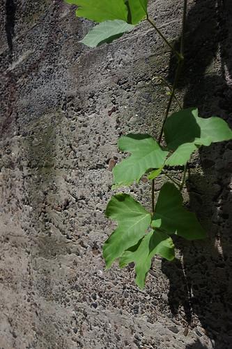 夏と元気な植物