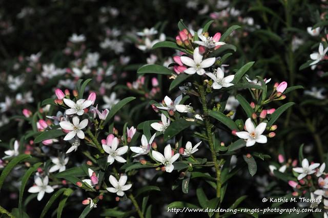 228-366 Small white flower