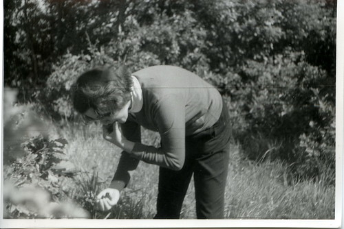 1965. Picking blackberries